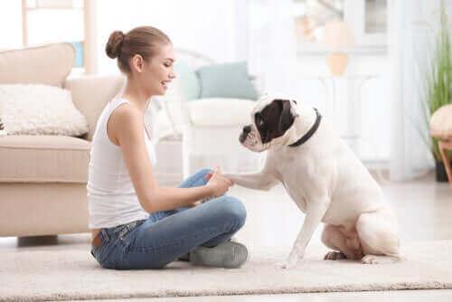 Training mit deinem Hund: Diese Dinge solltest du beachten
