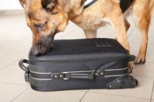 von Polizeihunden - Hund an einem Koffer