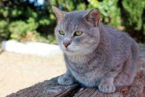 Katzen können auch sehr lange leben