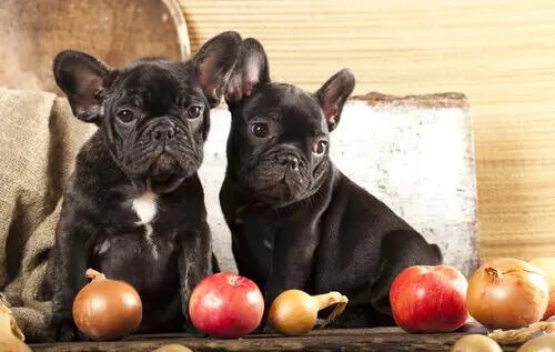 Dürfen Welpen eingemachtes Gemüse essen?