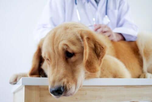 Fellnase wird vom Tierarzt untersucht