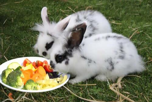 Glückliche Kaninchen vor der Futterschale