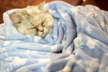 Halten Katzen Winterschlaf?