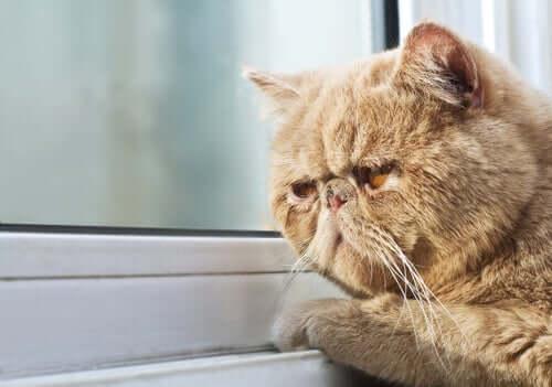 Mieze schaut gelangweilt und melancholisch aus dem Fenster
