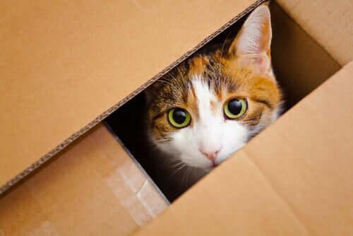 Katze schaut aus der Kiste