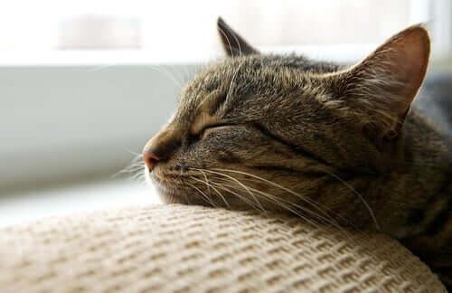 Samtpfötchen schlummert auf der Couch
