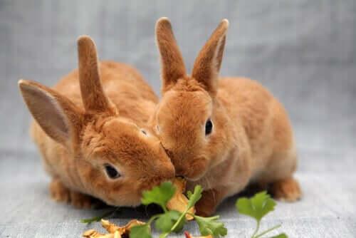 Schädliches Futter für Kaninchen