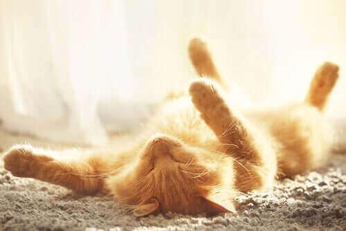Hitzschlag bei Katzen: Symptome und Vorbeugung