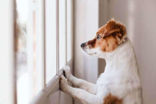 Hunde, die an Wänden lecken - mögliche Ursachen