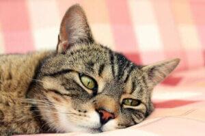 Hitzschlag bei Katzen - Katze auf dem Sofa