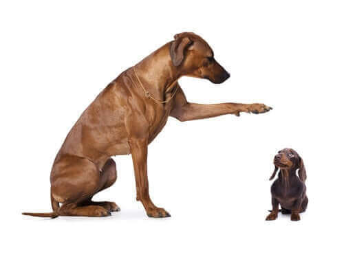 Hund kastrieren - großer und kleiner Hund