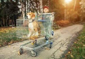 Rassehund - Junge schiebt Hund im Einkaufswagen