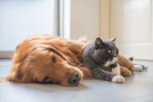 Wildkatzen in Gefangenschaft - Hund und Katze
