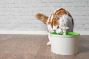 Hitzschlag bei Katzen - Katze trinkt