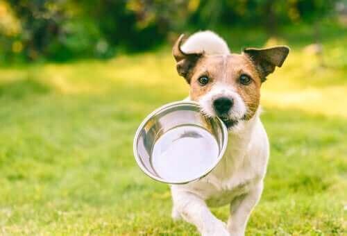 Wände lecken - Hund trägt seinen Futternapf