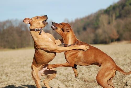 Verhaltensänderung deines Hundes: Ursachen und Tipps