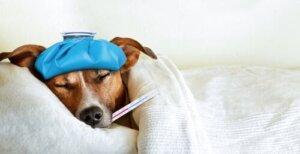 Grippe bei Haustieren - so verhinderst du die Ausbreitung