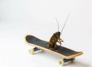 Kakerlaken, die ältesten Insekten der Welt?