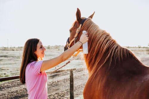 Ringelflechte bei Pferden: Diagnose und Behandlung