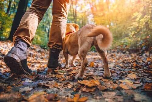 Trekking mit Hunden: Diese Rassen eignen sich bestens dafür
