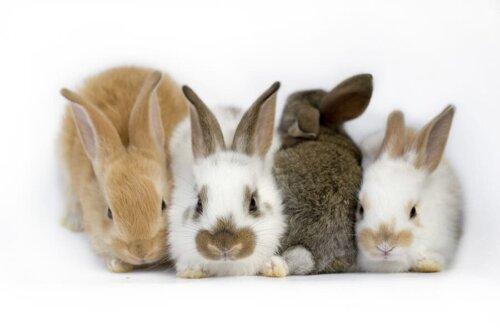 Vestibular-Syndrom bei Kaninchen - alles Wissenswerte