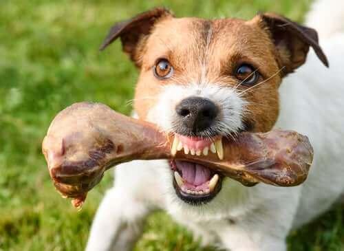 Was sind ernährungsbedingte Aggressionen bei Hunden?