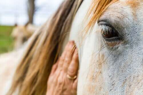 Ringelflechte - Pferd wird gestreichelt