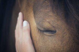 Ringelflechte - Pferd mit geschlossenen Augen
