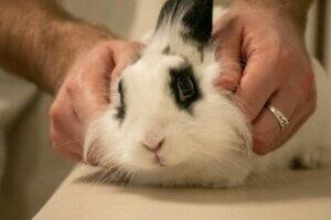 Vestibular-Syndrom - Kaninchen beim Tierarzt