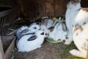 Vestibular-Syndrom - Kaninchenjunge mit ihrer Mutter