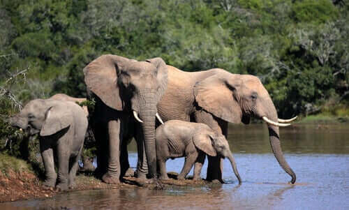 Wilde Elefanten - am Wasserloch