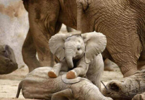 Elefantenbabys