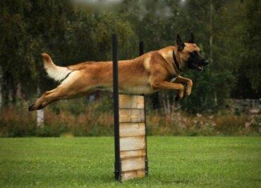 Sportliche Aktivitäten für Hunde: Alles Wissenswerte!