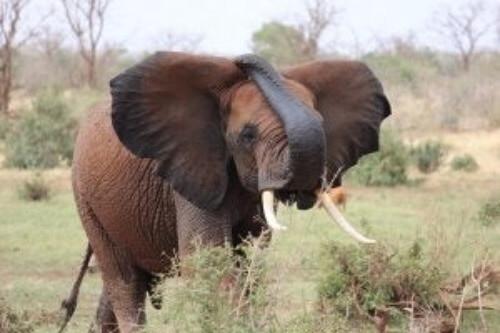 Geschichte der Elefanten