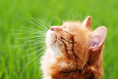 Immunsystem deiner Katze stärken: Darauf solltest du achten