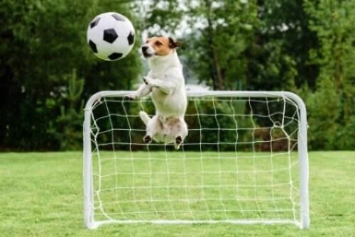Sportliche Aktivitäten - Hund beim Fussballspielen