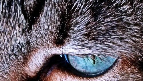 Warum verändert sich die Fellfarbe bei Katzen?