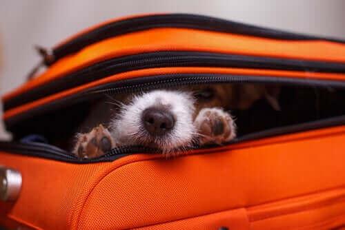 Verstecken: Welche Gründe hat dieses Verhalten von Hunden?