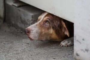 verstecken - verängstiger Hund