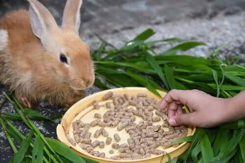 Anorexie bei Kaninchen
