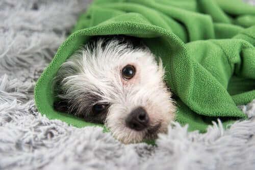 Hilfreiche Tipps, um einer Erkältung bei Hunden vorzubeugen