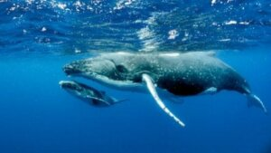 Bestimmte Grippeviren können sogar Wale befallen