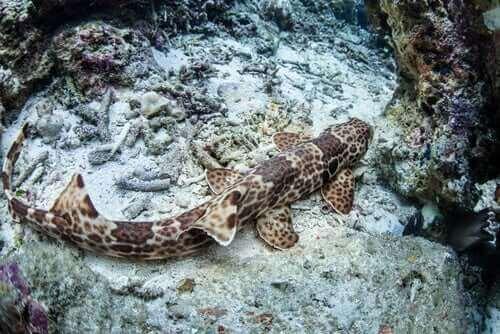 Wanderhaie: Haie, die an Land laufen können