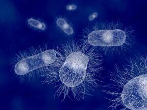 Escherichia Coli: Das Bakterium der Säugetiere