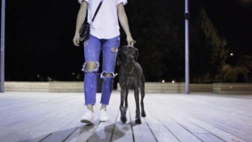 Frau findet Hund auf der Strasse