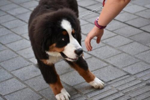 Haustier gestohlen