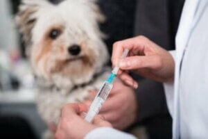 Achte darauf, dass der Impfpass deines Hundes stets auf dem neuesten Stand ist