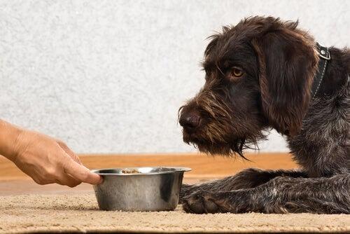 Hund will nicht fressen