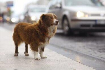 Was tun, wenn dein Haustier gestohlen wurde?