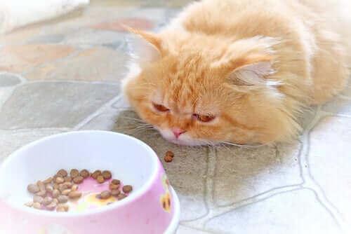 Pflege einer kranken Katze: Die richtige Ernährung